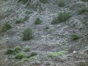 stephane-louesdon-alone-in-babylone-13