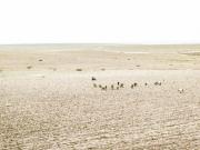 stephane-louesdon-alone-in-babylone-9