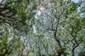 prints-covid-trees-10