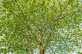 prints-covid-trees-2