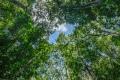 prints-covid-trees-3