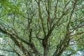 prints-covid-trees-4