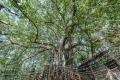 prints-covid-trees-5