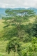 prints-covid-trees-6