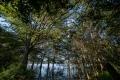 prints-covid-trees-7