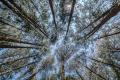 prints-covid-trees-8