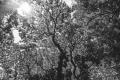 prints-covid-trees-9